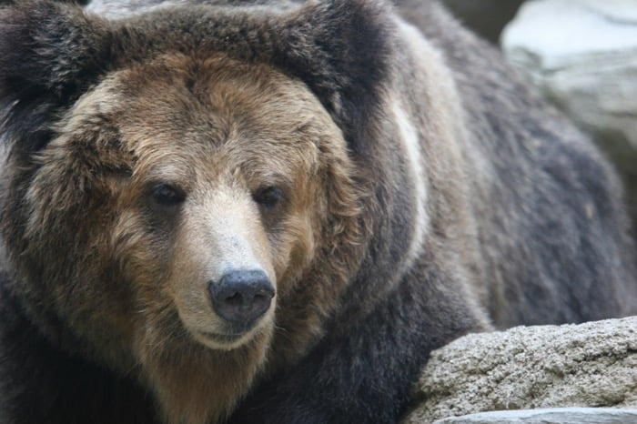 クマ対策の新常識「クマよけ鈴は効果なし」 音効果の期待と現実