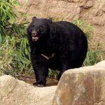熊被害が急増