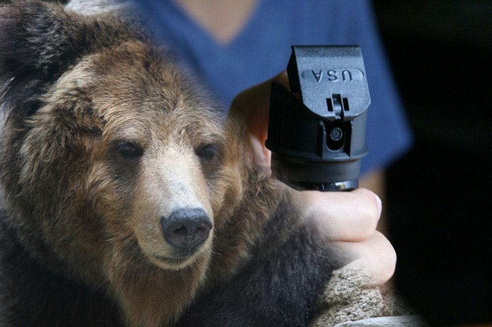 対人用の催涙スプレーで熊は撃退できるのか